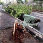 Ураган в Москве унес жизни более 10 человек
