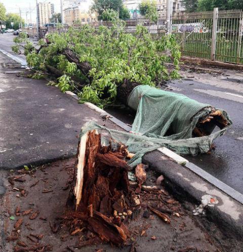 14977 Ураган в Москве унес жизни более 10 человек