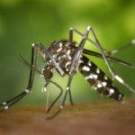 19619 5 способов защититься от назойливых насекомых