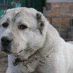 37424 Была у одного товарища собачка…