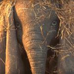 Ева Грин и Колин Фаррелл в трейлере фильма «Дамбо» о слоненке