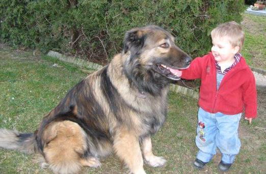Огромный кавказец несся прямо на двухлетнего ребенка, отец чуть не поседел от страха.