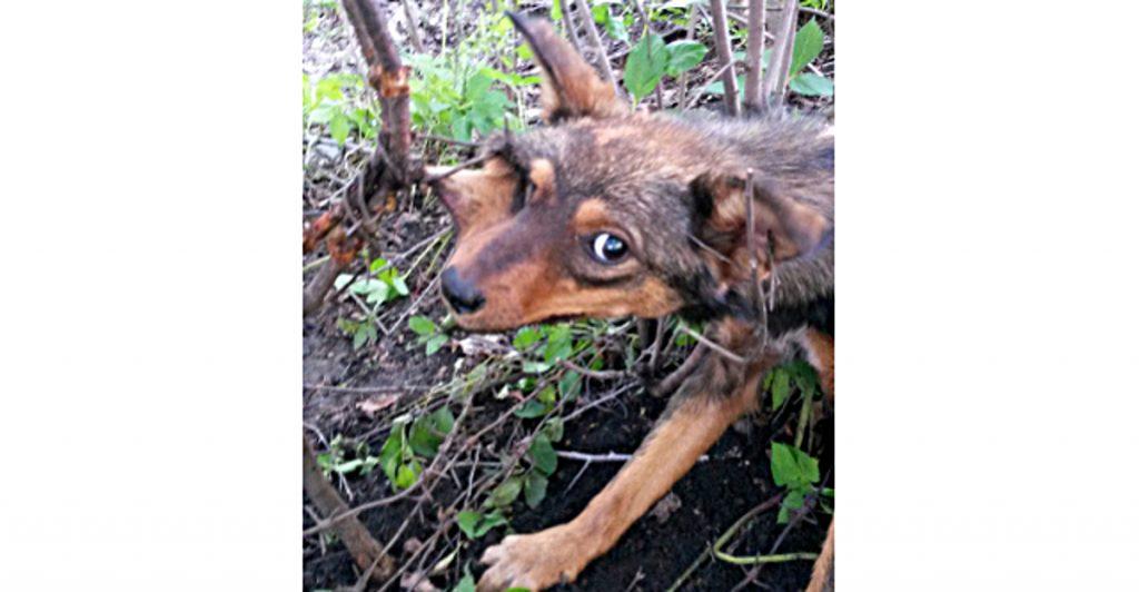Я узнала, что у нас в пригороде на садовом участке собака уже НЕДЕЛЮ висит на проволоке и никто ей не помог…