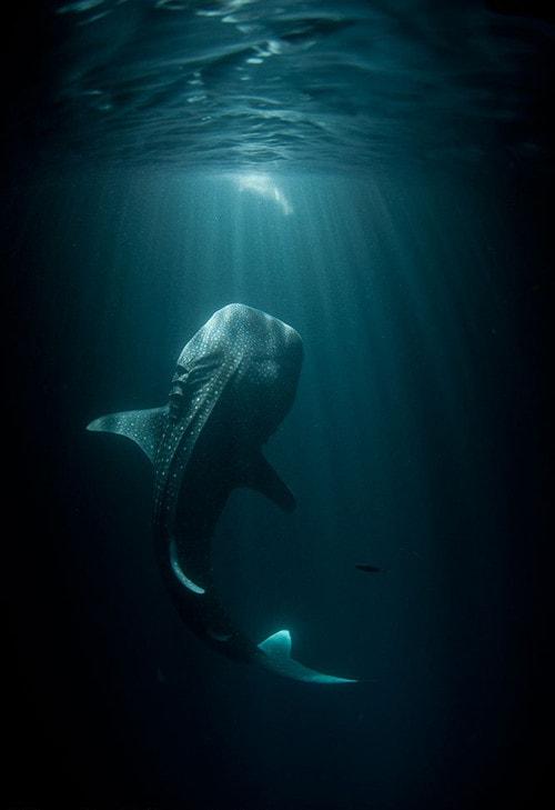 45101 14 фотографий водных жителей, которые отобьют у вас охоту нырять!