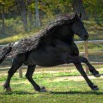 45221 Самый красивый конь в мире Фредерик Великий