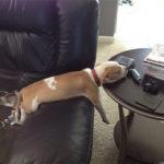 24 доказательства, что животные засыпают везде и в любой позе