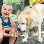50326 Ребенок года: 7-летний мальчик спас 1300 собак