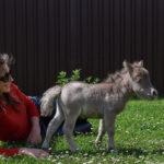 50234 В это невозможно поверить: на свет появился самый маленький конь