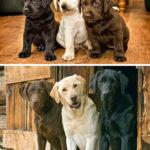 51564 15 фотографий животных, которые росли и взрослели вместе