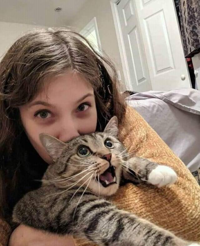 15 котиков, которые решили показать свои зубки и выглядели при этом очень смешно