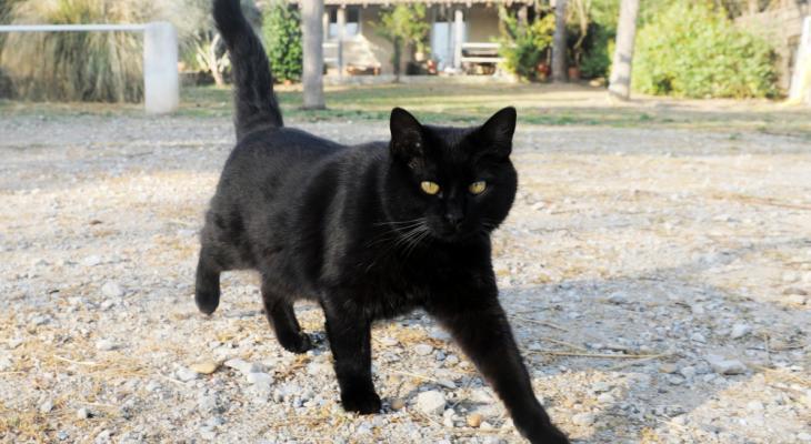 52539 Кошка стала приемной мамой для очень необычного детёныша