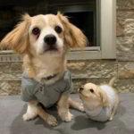 51411 Маленький мальчик собрал из конструктора Лего коляску для щенка с инвалидностью