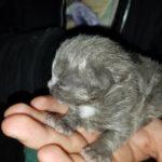51660 Мужчина нашел в своей лодке маленького котенка и он стал его близким другом