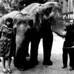 52667 Слонёнок в одесской квартире — такого вы еще не видели!
