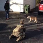 52181 Трогательные кадры встречи хозяйки со своей собакой после 2-х лет разлуки