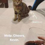 52551 В лице этого уличного котика, американцы Эрин Бриан и Лэндон Боруп, нашли нового друга