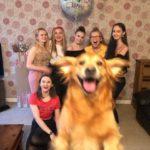 55578 15 забавных и смешных фотографий собак, с которыми хозяева точно не соскучатся
