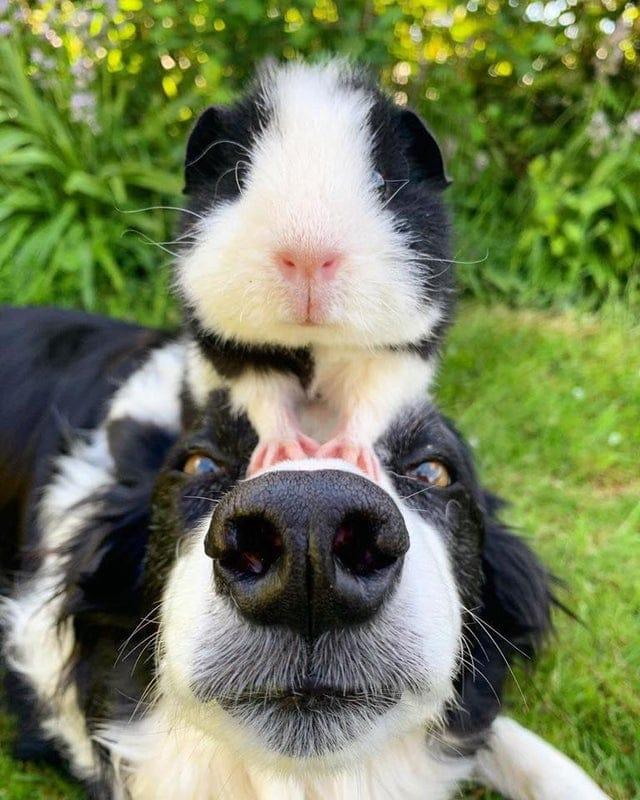 15 забавных и смешных фотографий собак, с которыми хозяева точно не соскучатся