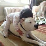 55178 20 трогательных фотографий о безусловной любви домашних животных