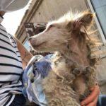 53703 Болезненно худая и очень испуганная собачка, ютилась в углу, пытаясь спрятаться от всего мира