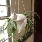 53912 Для сна нет преград: 30 фото котов, которые это доказали