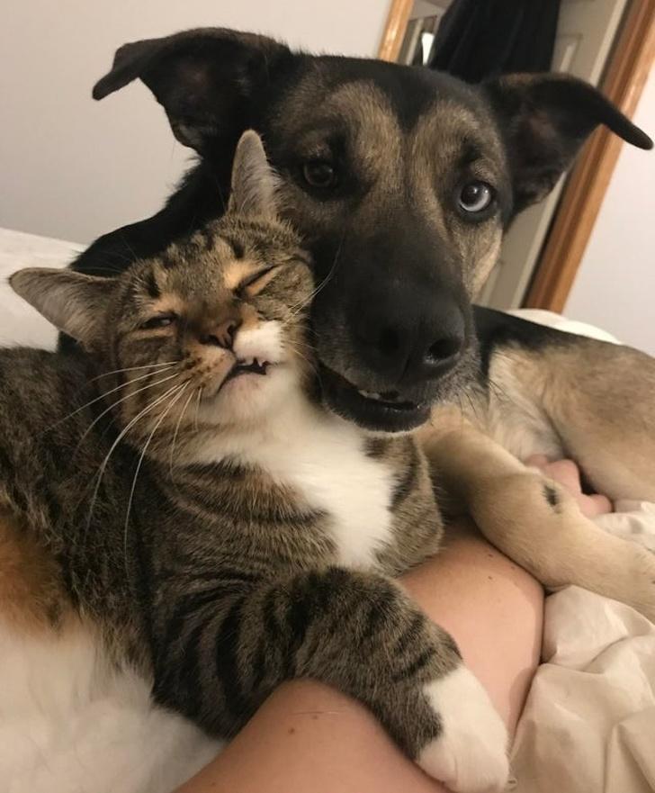 54367 Доказательство того, что выражение — «как кошка с собакой», теряет свою актуальность