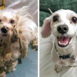 54140 Фотографии собак, у которых появилась новая семья