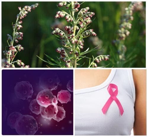 54831 Учёные из США: Полынь убивает 98% раковых клеток молочной железы за 16 часов