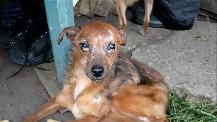 Волонтеры спасли 11 собак, которые жили в ужасных условиях и ели только хлеб
