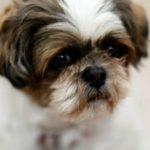 56246 Выполняя последнюю волю хозяйки, ветеринары усыпили абсолютно здоровую собаку