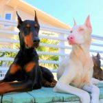 54825 Животные-альбиносы, которые поразят вас своей необыкновенной красотой