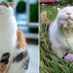61210 10 обязанностей любого кота