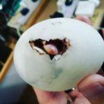 60801 Из яйца, которое женщина купила во вьетнамском ресторане, вылупился утенок, который стал ее лучшим другом