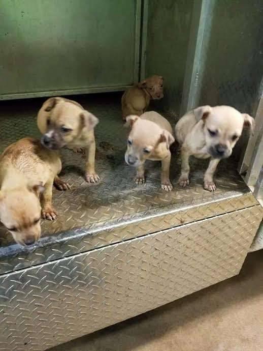 65447 Девушка нашла на улице тощих щенков, но у одного были очень странные ушки