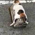 64338 Кошки в Японии используют парковочные барьеры как подушки, и это выглядит очень забавно