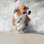 67552 Неподдельные эмоции отважных собак, которые бояться самую обычную воду