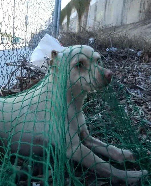 64612 Парень вырвал бездомного пса из рук отловщиков, которые хотели его усыпить