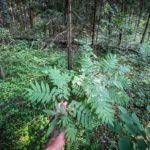 63795 Парни нашли в лесу загадочный стальной цилиндр и показали что там внутри