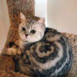 67320 Самые необычные окрасы котиков