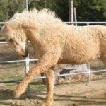 65147 Выходки матушки-природы: таких животных вы еще не видели