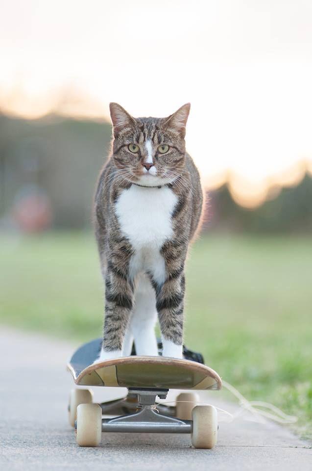 68280 Диджа, которою забрали из приюта, попала в книгу рекордов Гиннесса как самая умная кошка в мире!