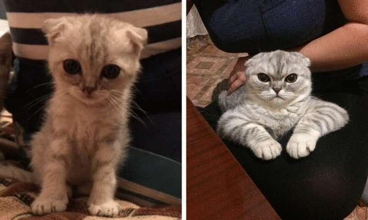 72812 Из котенка в котяру: люди поделились фотографиями мурлык в детстве и сейчас