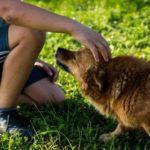 68773 Люди научатся разговаривать с собаками до 2040 года