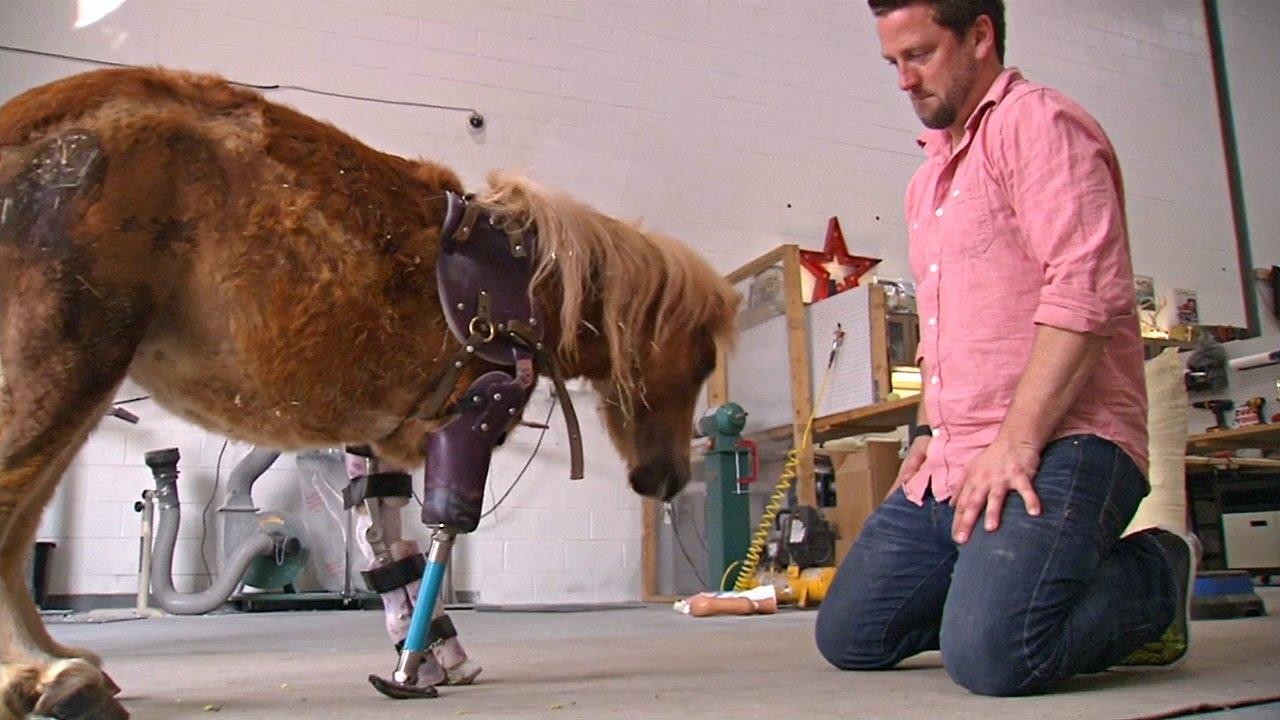 Он спас около 20 тысяч животных. Ортопед из Америки ставит протезы кошкам, верблюдам и даже слонам