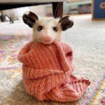 69403 Опоссумы — недооцененные и очаровательные животные
