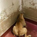 73175 Собака пряталась в угол и вздрагивала от каждого шороха