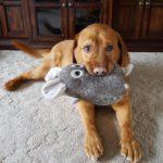 78382 24 ярких доказательств того, что не только детишкам, но и всем домашним животным, очень нужны свои игрушки!