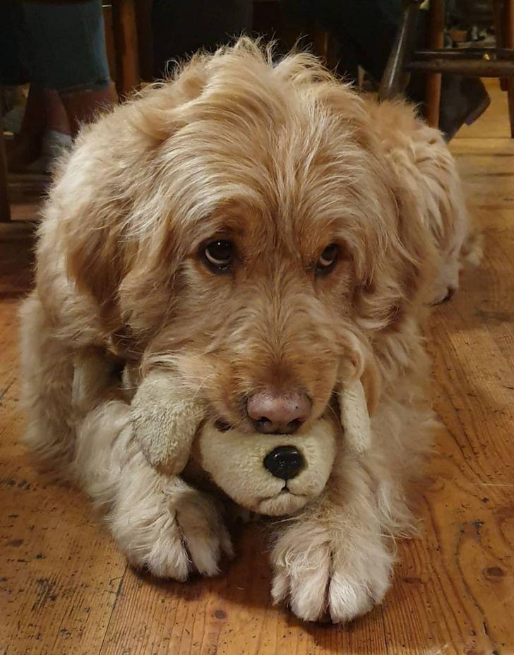 24 ярких доказательств того, что не только детишкам, но и всем домашним животным, очень нужны свои игрушки!
