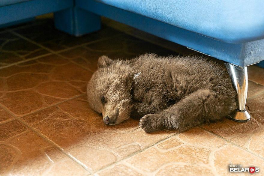 Мужчина спас маленького медвежонка, который теперь живет у него на ферме