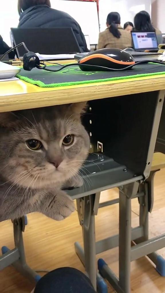Кот не хотел оставаться один дома и студентка тайно пронесла его на пары
